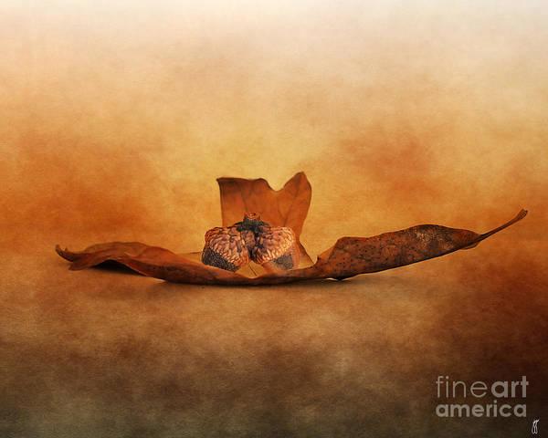 Photograph - Fallen Together by Jai Johnson