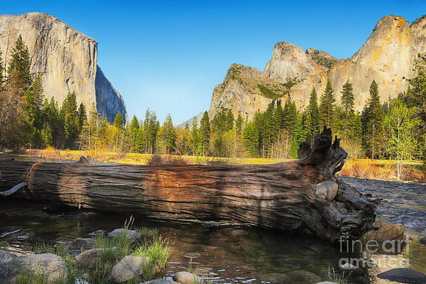Merced River Photograph - Fallen Tree In Yosemite by Jane Rix