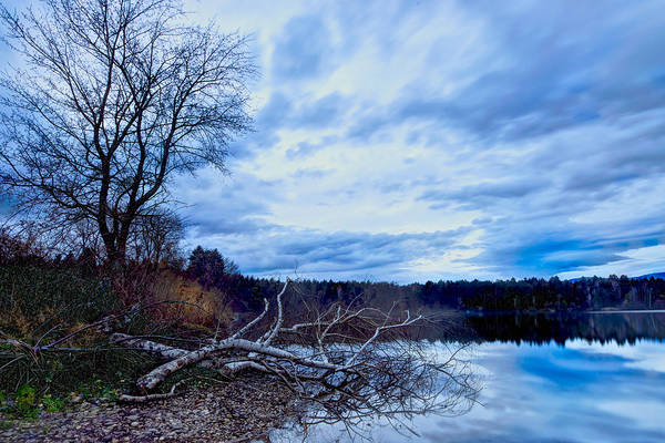 Photograph - Fallen Tree by Ivan Slosar