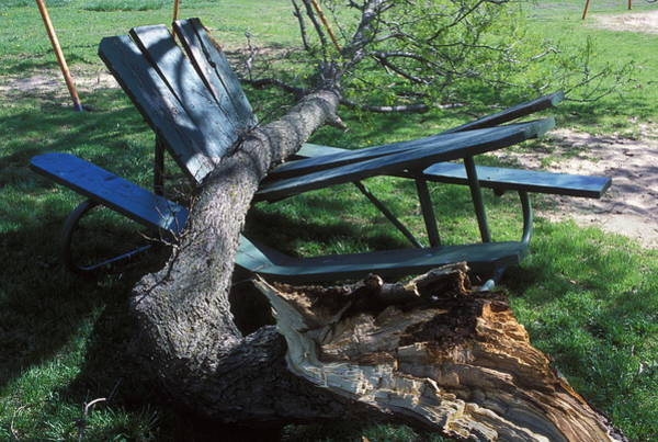 Picnic Tables Photograph - Fallen Tree by Jim Reed/science Photo Library