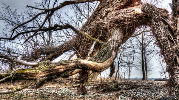 Photograph - Fallen Twisted Giant by Jorge Perez - BlueBeardImagery