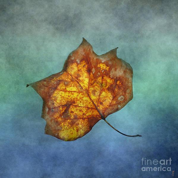 Photograph - Fallen Yellow Leaf by Jai Johnson