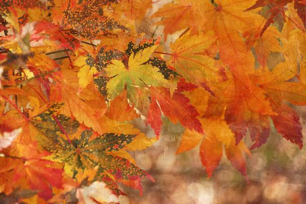 Photograph - Falling Colors I by Leda Robertson