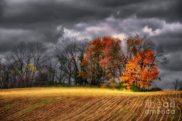Agrarian Wall Art - Photograph - Falling Into Winter by Lois Bryan