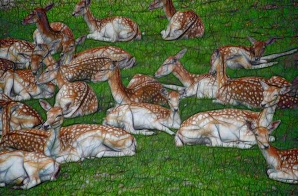 Photograph - Fallow Deer Resting by Beth Sawickie