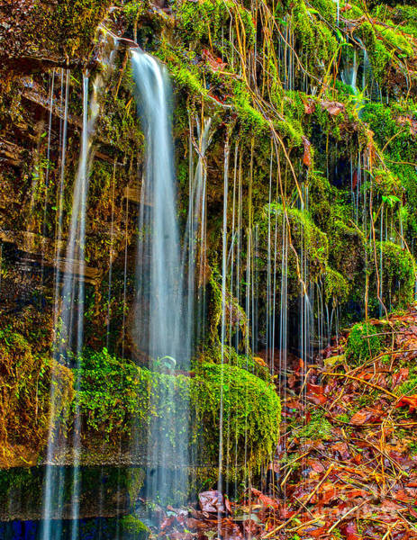 Photograph - Falls And Moss by Nick Zelinsky