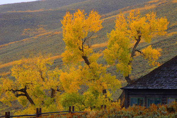 Photograph - Fall's Arrival At The Yellowstone Association Institute Area by Craig Ratcliffe