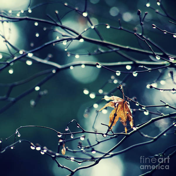 Photograph - Fall's Last Leaf - Hipster Photo Square by Charmian Vistaunet