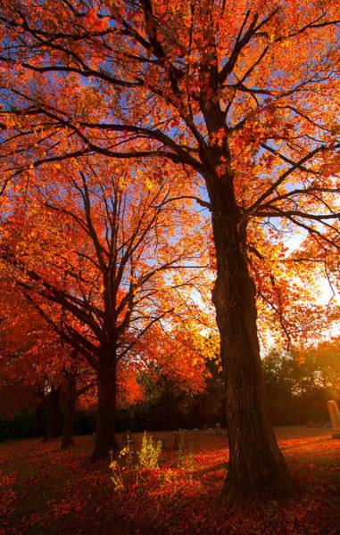 Fall's Splendor Art Print