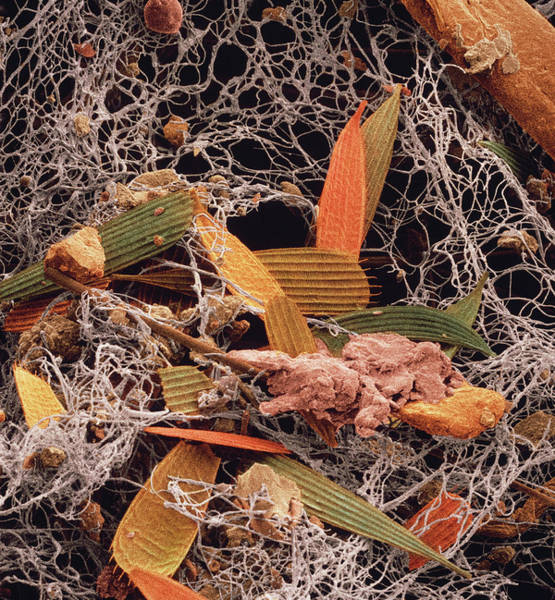 Wall Art - Photograph - False-col Sem Of A Sample Of Household Dust by David Scharf/science Photo Library