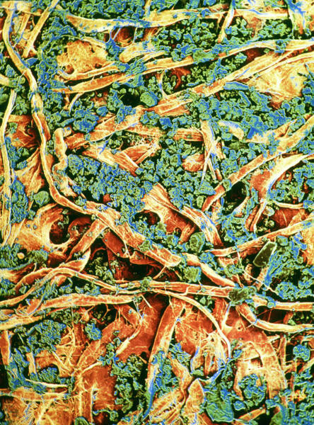 Wall Art - Photograph - False-colour Sem Of Dirty Filter Paper by Dr Jeremy Burgess/science Photo Library