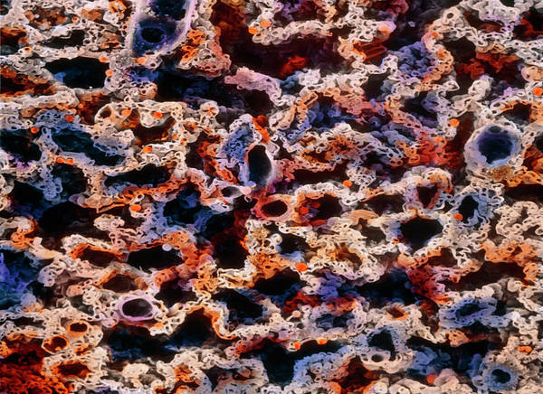Microscopic Photograph - False-colour Sem Of Sectioned Tissue Of A Lung by Prof. P. Motta/dept. Of Anatomy/university \la Sapienza\, Rome/science Photo Library