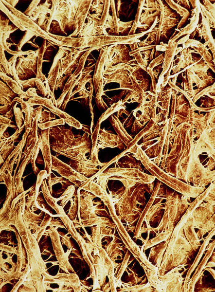 Wall Art - Photograph - False-colour Sem Of Unused Filter Paper by Dr Jeremy Burgess/science Photo Library