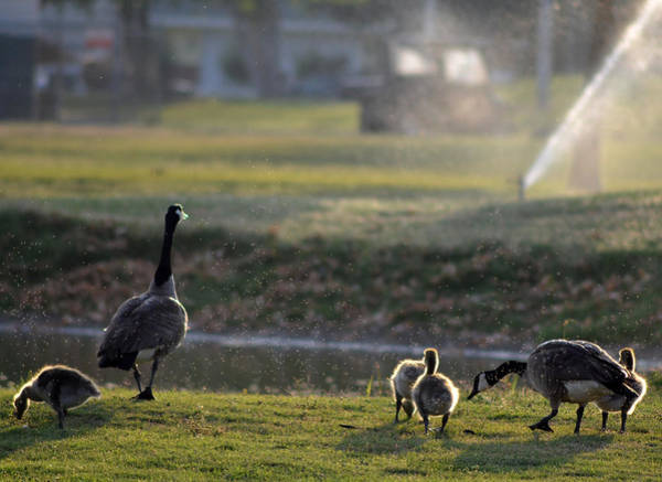 Mother Goose Photograph - Family Affair by Camille Lopez