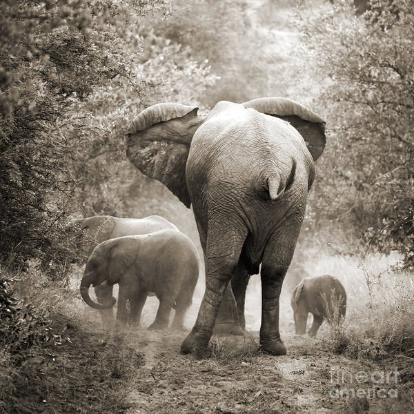 Wall Art - Photograph - Family Of Elephants by Delphimages Photo Creations