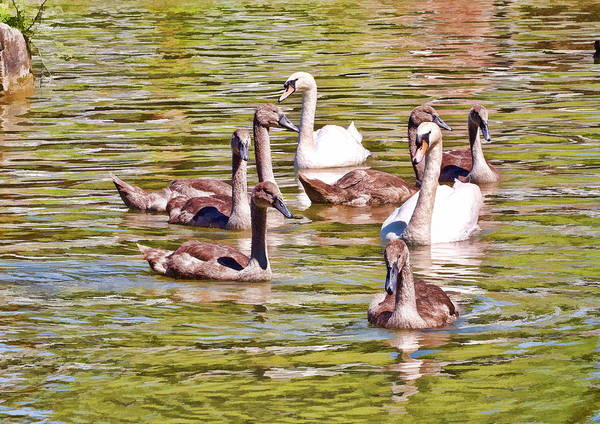 Photograph - Family Outing by Paul Gulliver