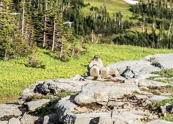 Marmot Photograph - Family Picnic by Aaron Aldrich