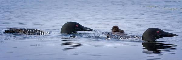 Photograph - Family Swim by Jeff Sinon