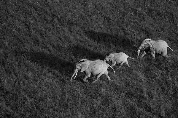 Kenya Wall Art - Photograph - Family Walk by John Fan