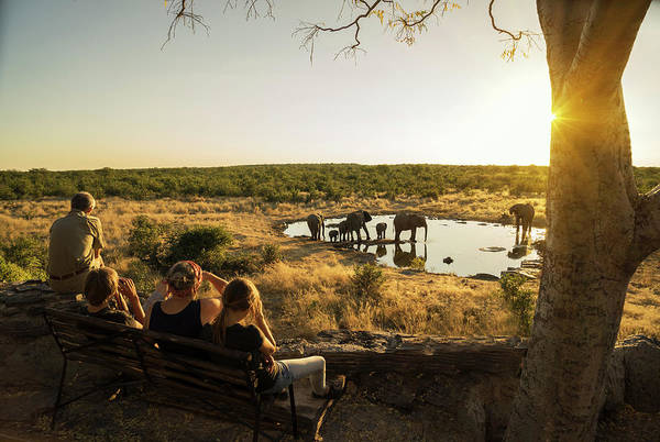 People Watching Photograph - Family Watching Elephants by Buena Vista Images