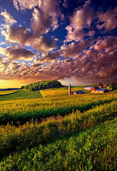 Corn Wall Art - Photograph - Famscaped by Phil Koch