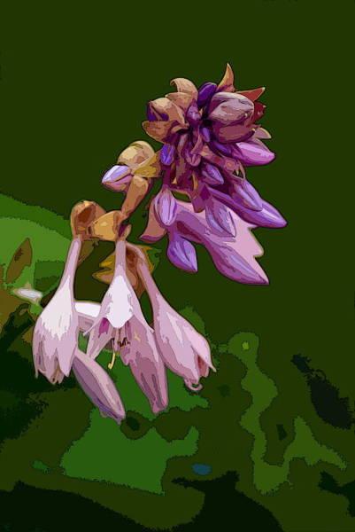 Photograph - Fancy Plants 1 by Ben Upham III