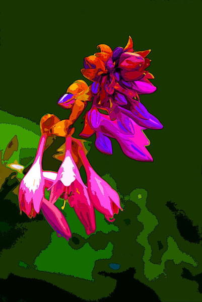Photograph - Fancy Plants 2 by Ben Upham III