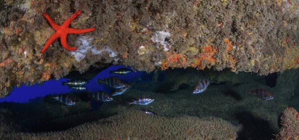 Undersea Photograph - Fanecas Cave by © Txomin Ribera