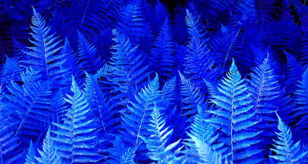 Photograph - Fantasy Blue Ferns by Duane McCullough