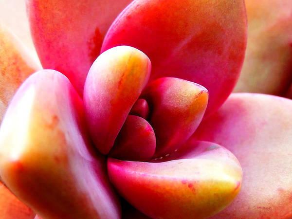 Photograph - Fantasy Flower 13 by Duane McCullough