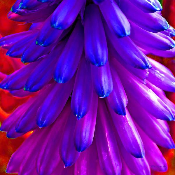 Fantasy Flower 5 Art Print