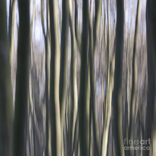 Photograph - Fantasy Wold by Heiko Koehrer-Wagner
