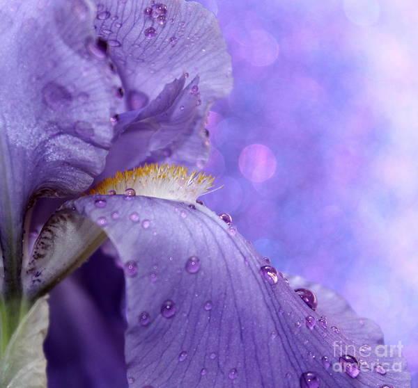 Iris Photograph - Fantasyland by Krissy Katsimbras