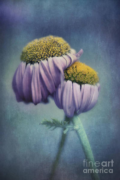 Blume Photograph - Farewell by Priska Wettstein