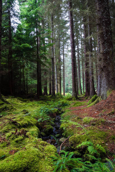 Bark Wall Art - Photograph - Farigaig Forest by Chris Dale