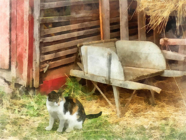 Photograph - Farm Cat by Susan Savad