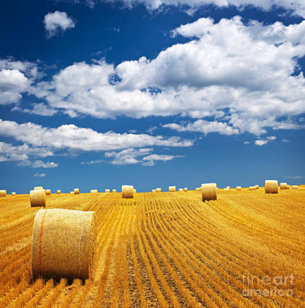 Harvesting Wall Art - Photograph - Farm Field With Hay Bales by Elena Elisseeva