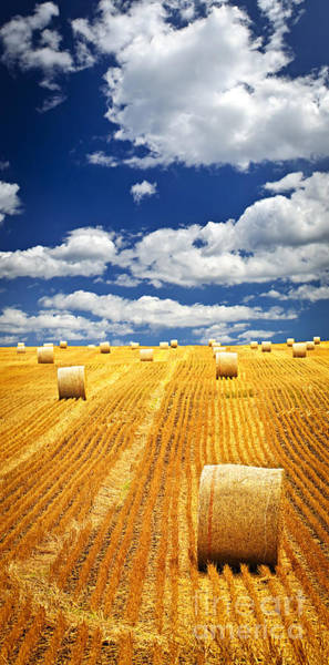Harvesting Wall Art - Photograph - Farm Field With Hay Bales In Saskatchewan by Elena Elisseeva