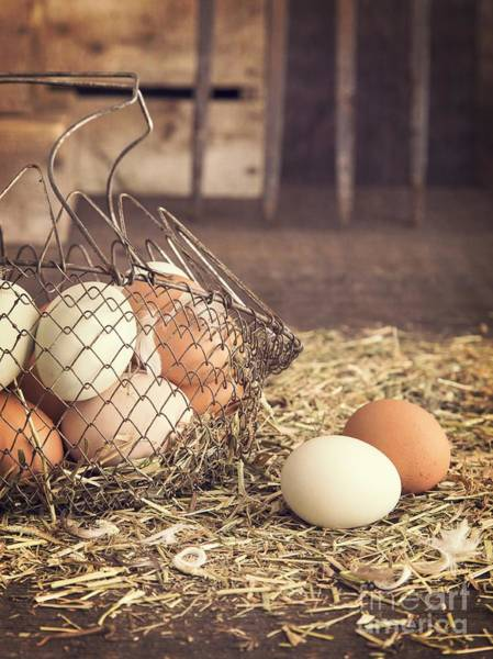 Recipe Photograph - Farm Fresh Eggs by Edward Fielding