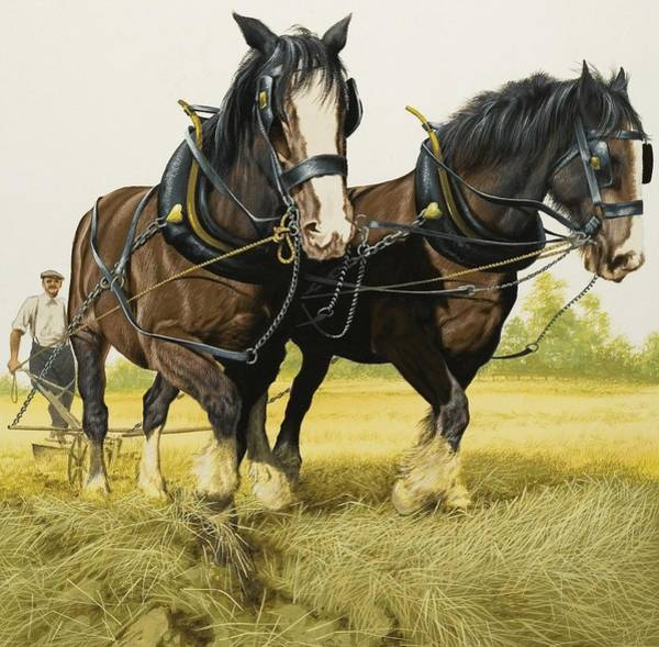 Ploughing Painting - Farm Horses by David Nockels
