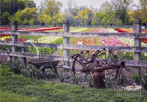 Holland Mi Digital Art - Farm Instruments And Tulips by Georgianne Giese