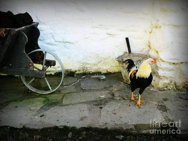 Peet Photograph - Farm Life by Kiana Carr
