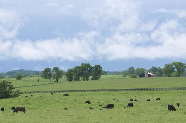 Wall Art - Photograph - Farm Scene by Byron Jorjorian