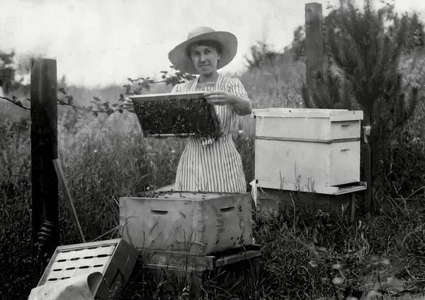 Bee Hive Photograph - Farm Wife Beekeeper 19th Century by Daniel Hagerman