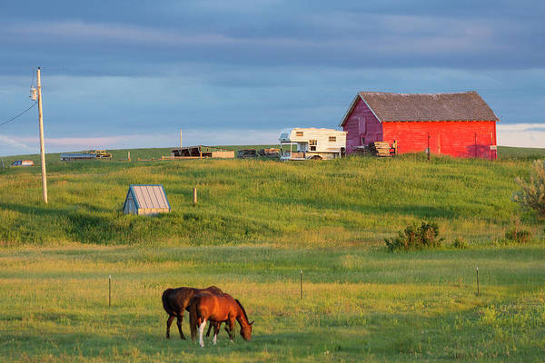 Barn Photograph - Farm With Barn & Horses, Northern by Peter Adams