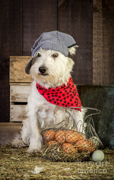 Photograph - Farmer Dog by Edward Fielding