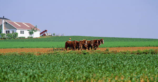 Lancaster County Photograph - Farmer Ploughing The Field With Horses by Animal Images