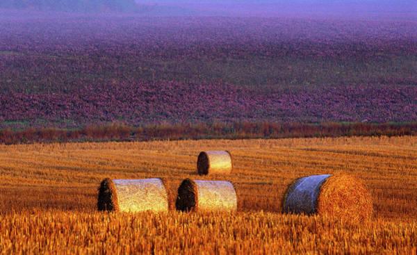 Hay Bale Wall Art - Photograph - Farmers Field by Allan Wallberg