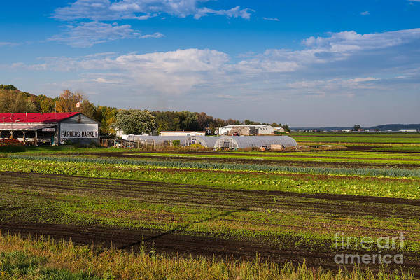 Photograph - Farmer's Market And Green Fields by Les Palenik