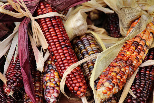 Photograph - Farmer's Market Flint Corn by Rory Sagner